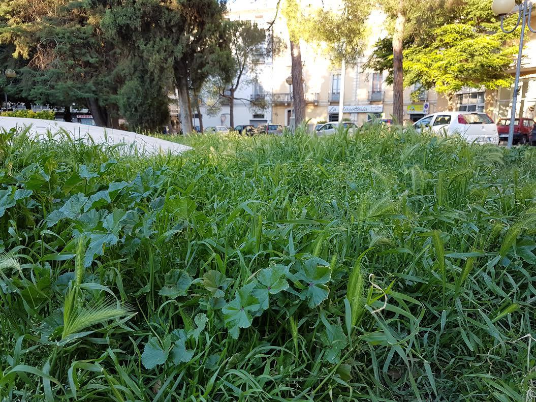 Trendy giardini senza cura sporchi e con la solita erba - Idee giardino senza erba ...